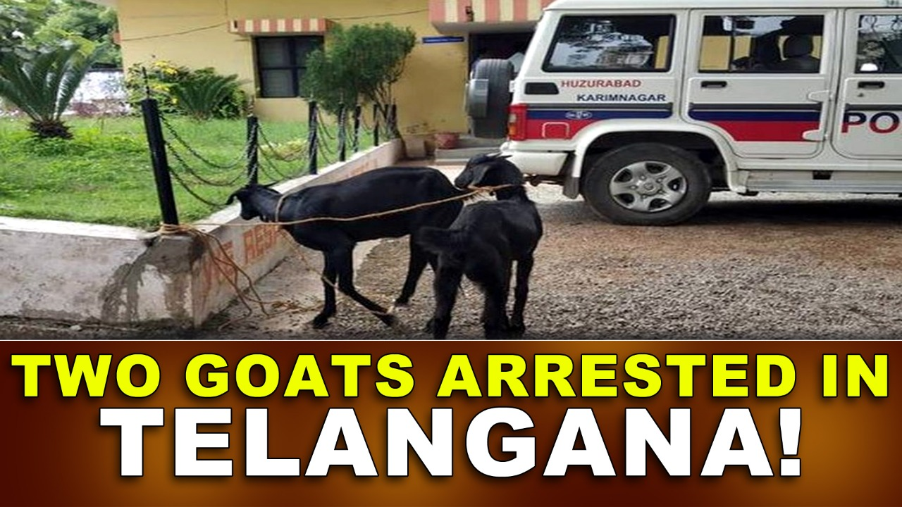 Two Goats Arrested in Telangana!
