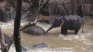 six wild elephants drown after slipping off waterfall in thai park, జలపాతంలో జారి..